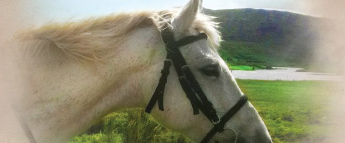 A Pony For Free  by best-selling author Jacqui Broderick